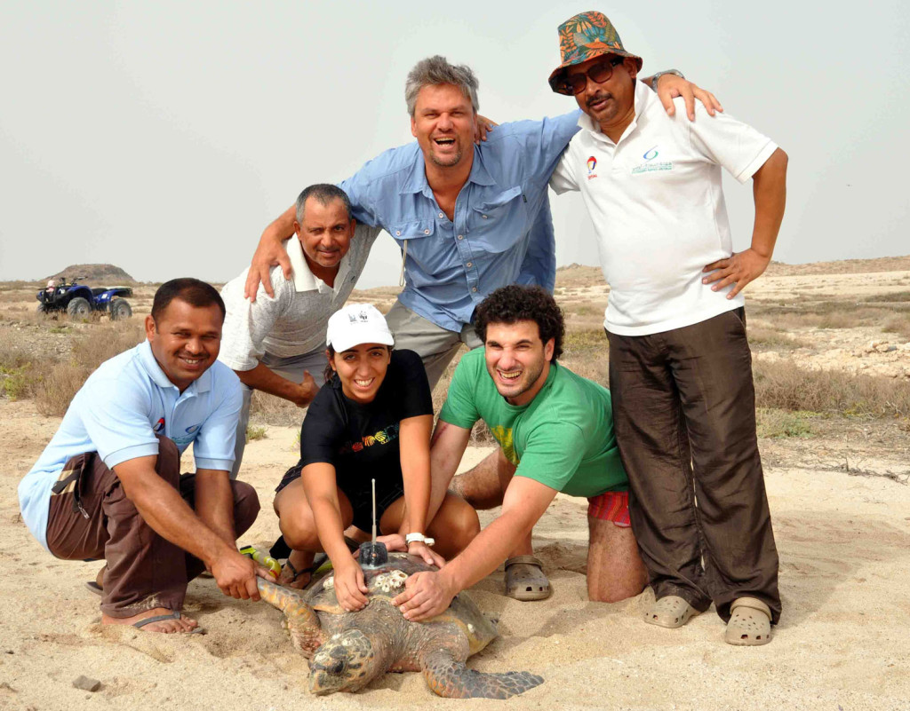 Latifa being tagged on Qarnein Island in Abu Dhabi. Photo: Edwin Grandcourt