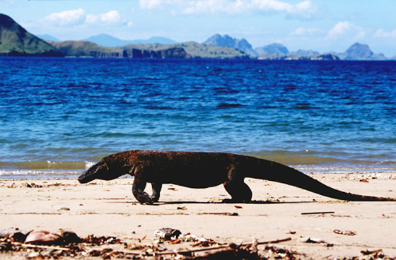 komodo-national-park.jpg